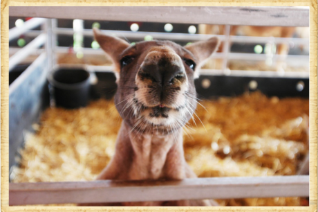 Barnyard Animals & Petting Zoo