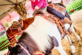 little girl having fun on pony ride