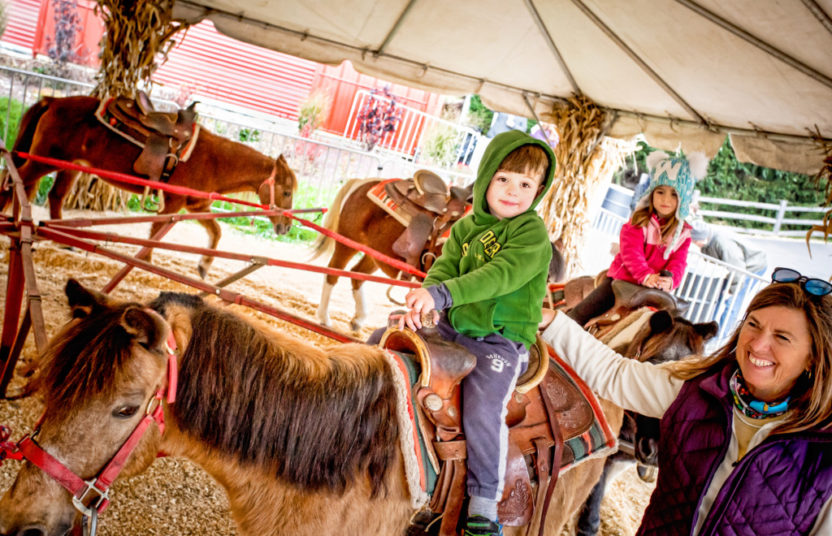 a boy having fun on the pony rides