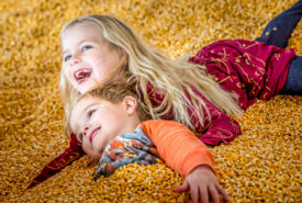 Happy Kids Having fun in the corn Kernel Pool at Bengtson Farm