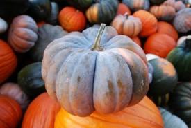 Cinderella Pumpkin on Pile