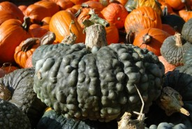 green pumpkin with wart-like bumps