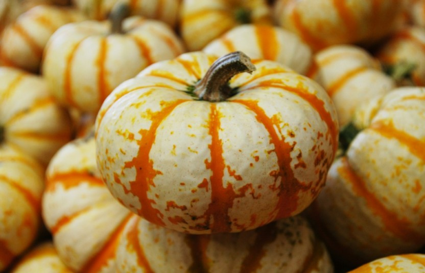 pile of small pumpkins with orange stripes