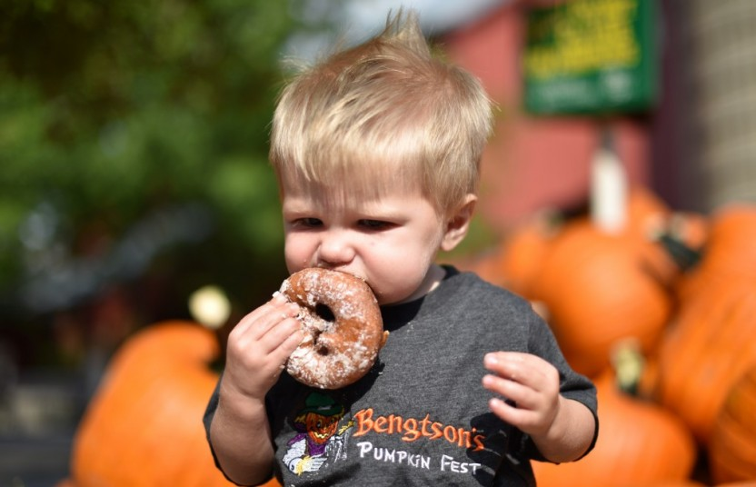 A child enjoying an apple cider doughnut at a pumpkin patch.