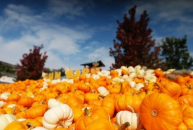 Mini Pumpkin Pie_Hayrack