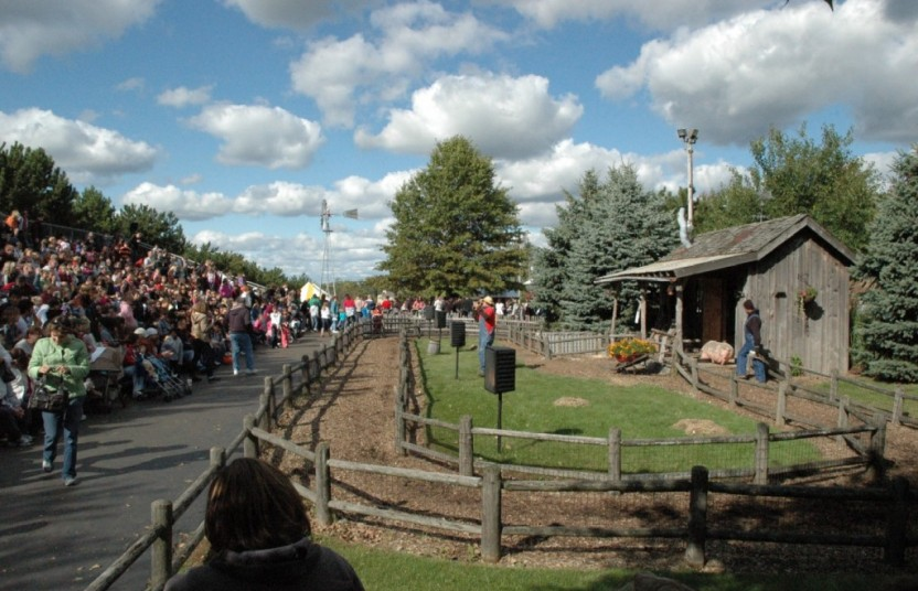crowd waiting for pig race show