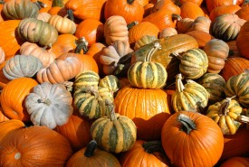 unique variety of pumpkins