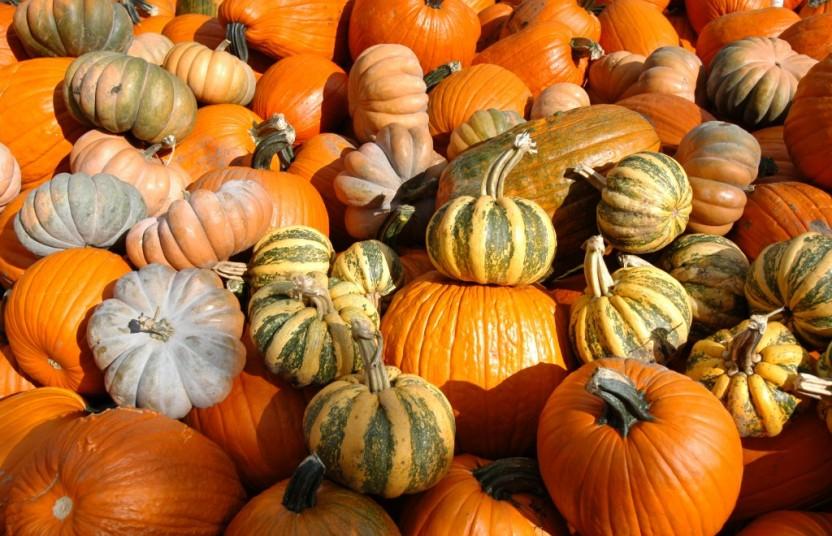 Pumpkin Pile Mix 2