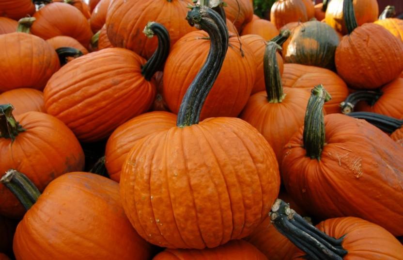 Pumpkin Pile Nice Stems (2)