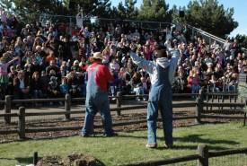 crowd cheering racing pigs