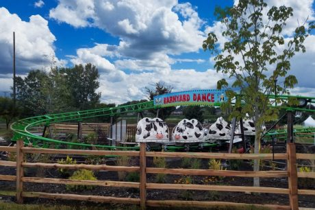 Barnyard Dance Cow Coaster