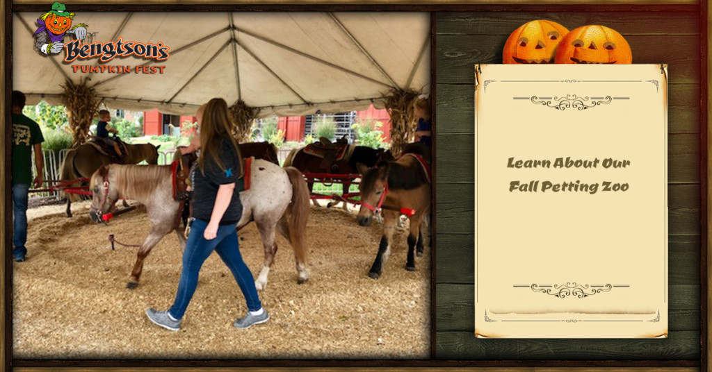 Learn About Our Fall Petting Zoo Bengtson S Pumpkin Farm