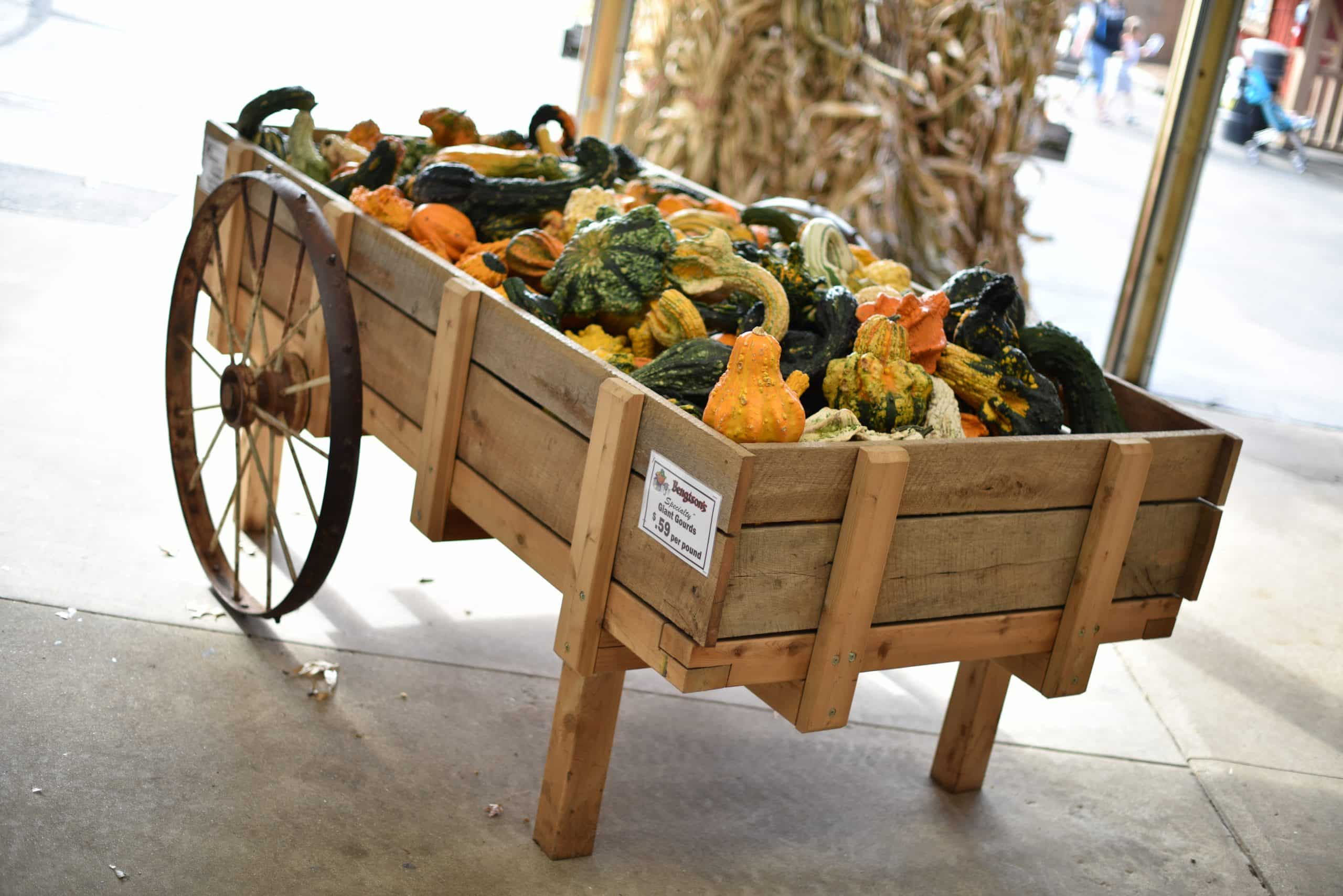 Gourds in a wagon